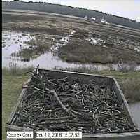 Osprey Cambridge Maryland Webcam - Cambridge, MD