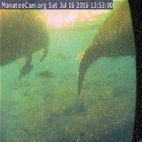 Homosassa Springs Manatees Webcam - Homosassa, FL