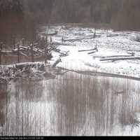 Carbon River Webcam - Mount Rainier National Park, WA